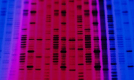 Study points to new genetic risks for autism
