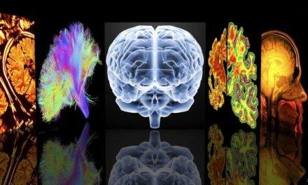 Brain's dementia weak spot identified