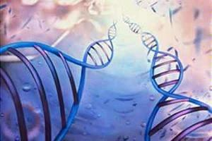 Seven genes tied to intellectual disability found