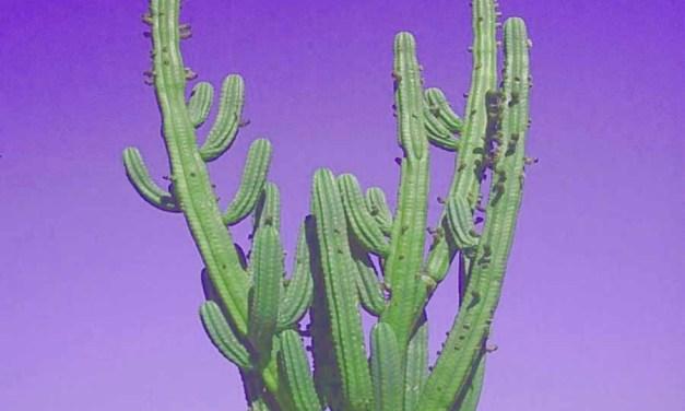 Always Keep A Cactus