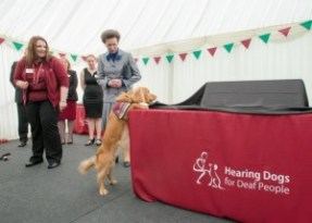 Hearing demonstration dog Brock unveiling the foundation stone