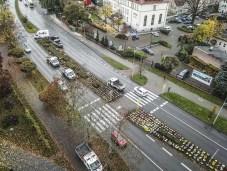Miasto Zielona Góra skupuje kwiaty chryzantemy od kwiciarzy