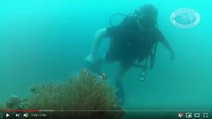 Rico Discover Scuba Diving Course
