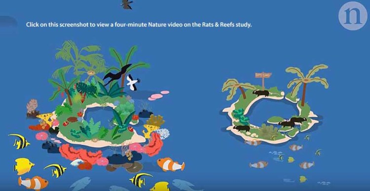 Rats and reefs on tropical islands are a bad combination.