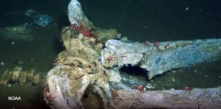 whale fall skeleton