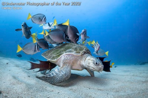 upy2020 turtle