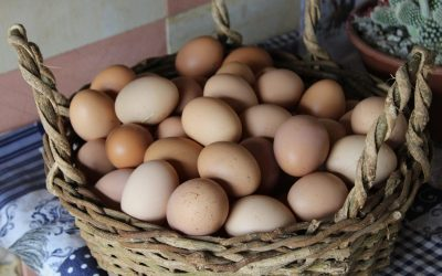 Egg Overdose: What to Eat When You Have Too Many Chickens