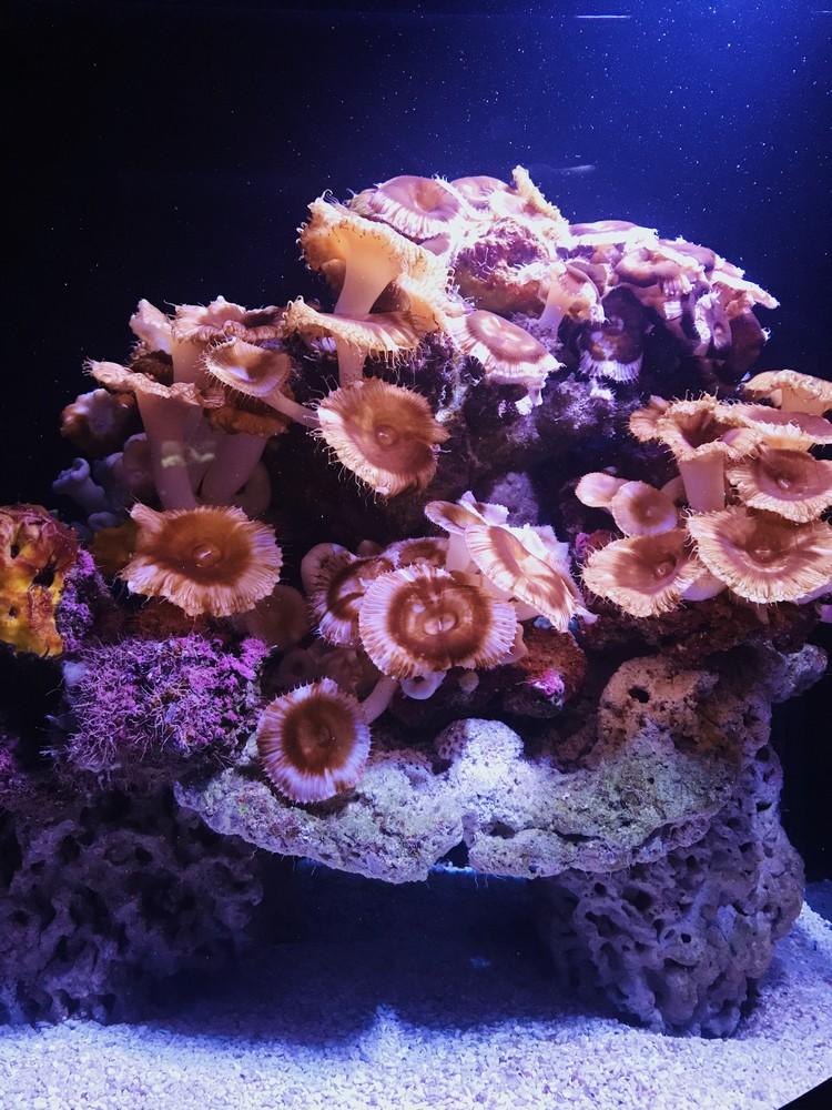 anemones musee oceanographique monaco