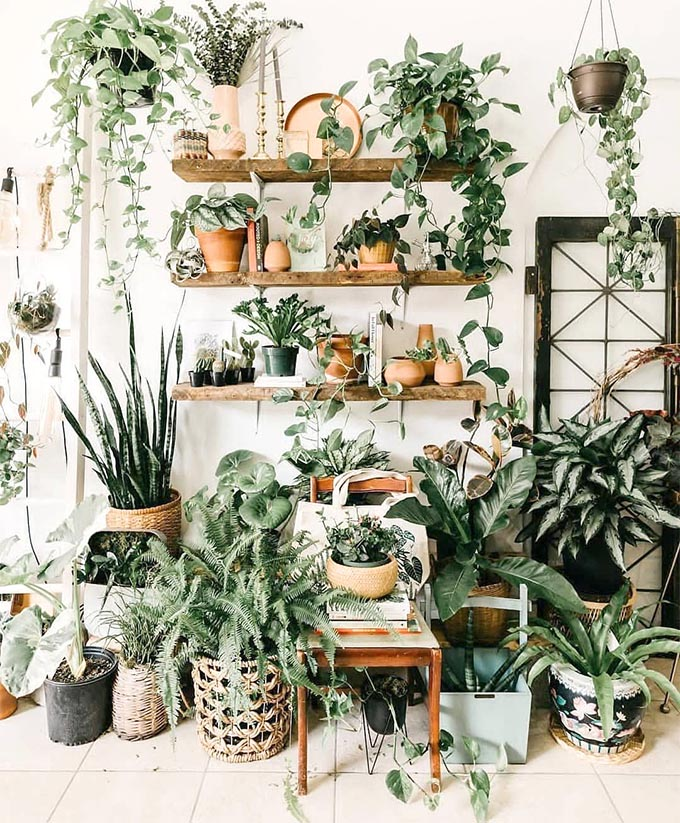 The Best 9 Indoor Hanging Plants Even A Beginner Won T Kill Posh Pennies