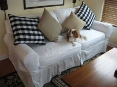 White Cotton Slipcover with a Spaniel