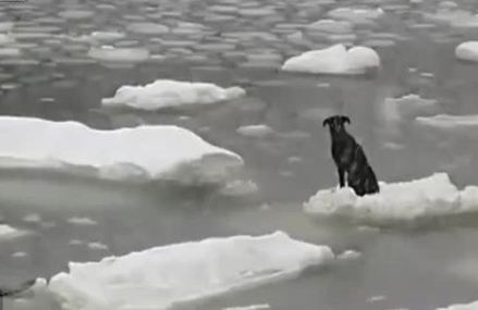 This Brave Fisherman Rescues Dog Stranded On Floating Ice In Siberia