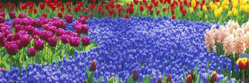 cropped-51dbd-flowergarden4.jpg