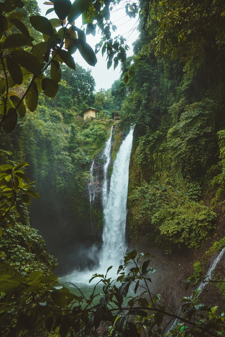 landscape photography of waterfalls surrounded by green leafed plants