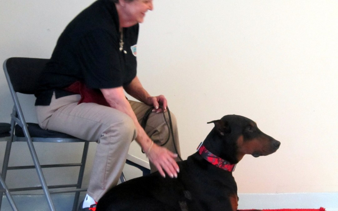 Getting your Therapy Dog Desensitized to Touch