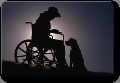 HIPAA and the Therapy Dog