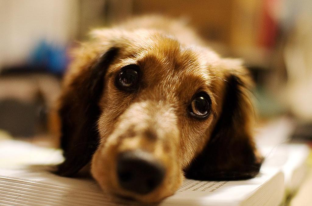 Does your dog say 'Please'?