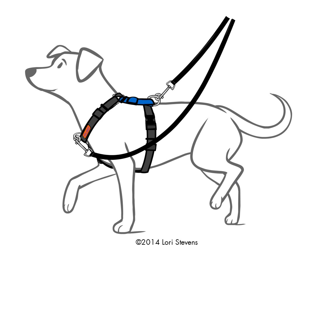 Balance Harness By Blue 9 Positive Partners Dog Training