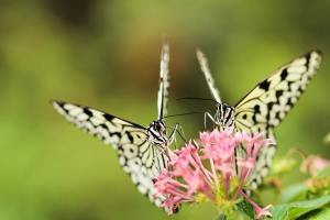 butterflies on a flower to represent change