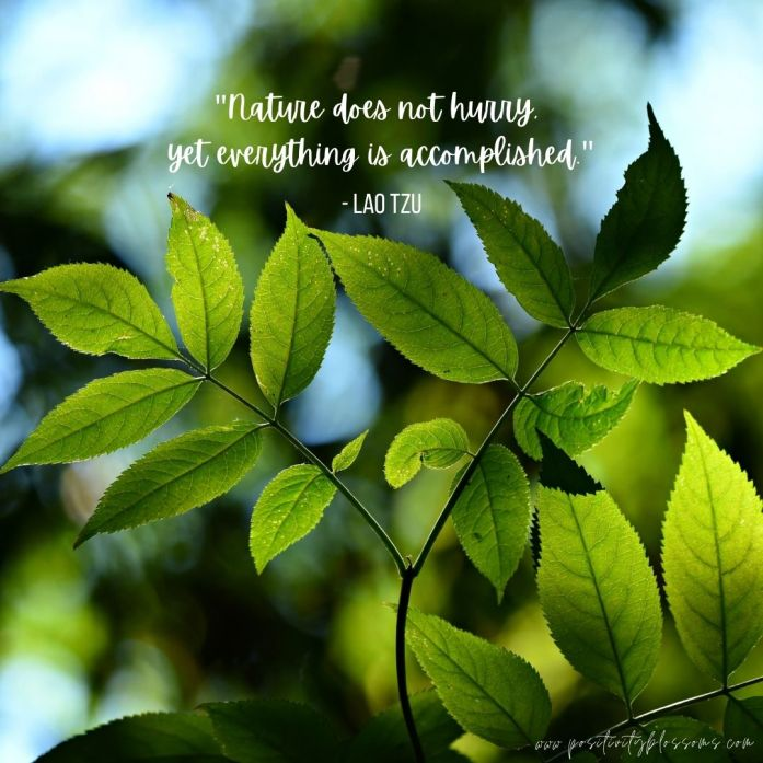 Nature does not hurry Lao Tzu quote image