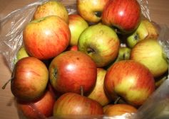 Äpfel aus Freundes Garten, die noch auf ein heißes Bad im Topf warten.