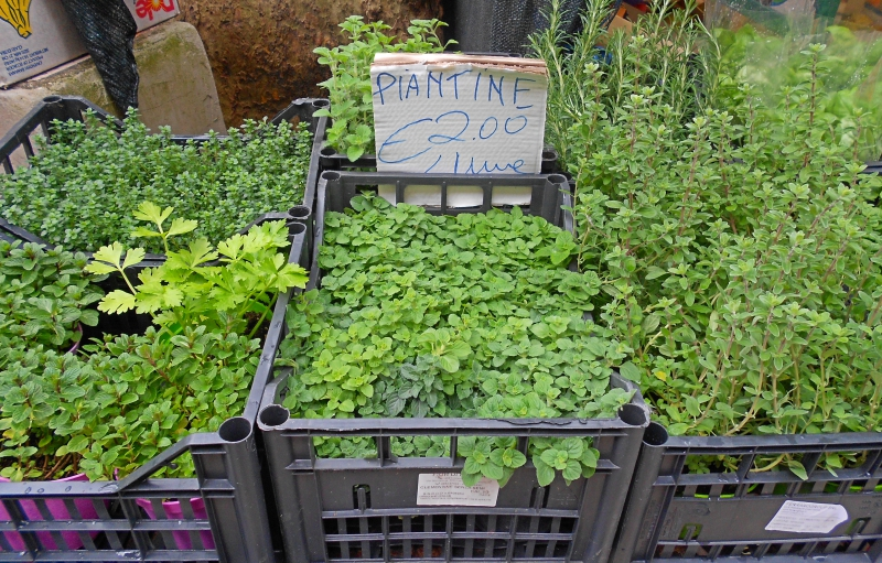 mercado-hortaliças-roma