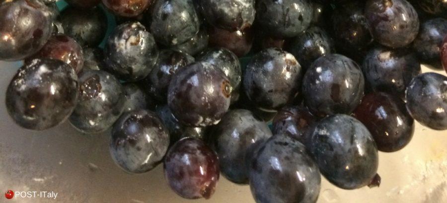 Receita típica toscana: schiacciata con l'uva