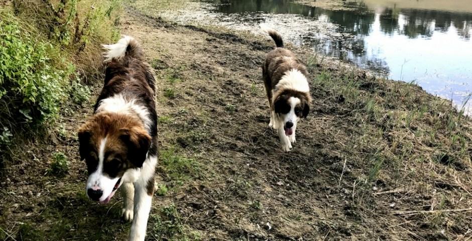 cachorros trufas na Itália