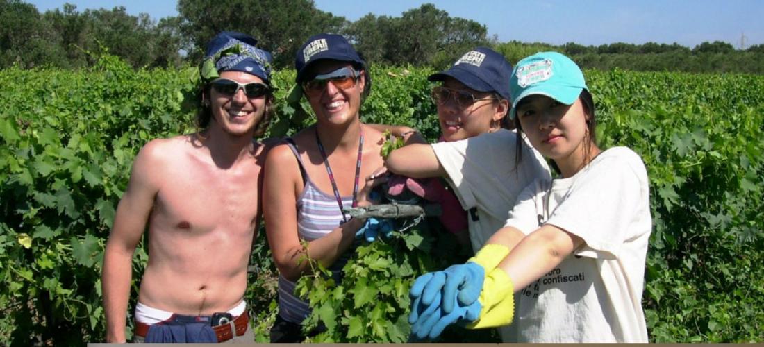 Turismo responsável: voluntário na Itália em propriedades confiscadas da máfia
