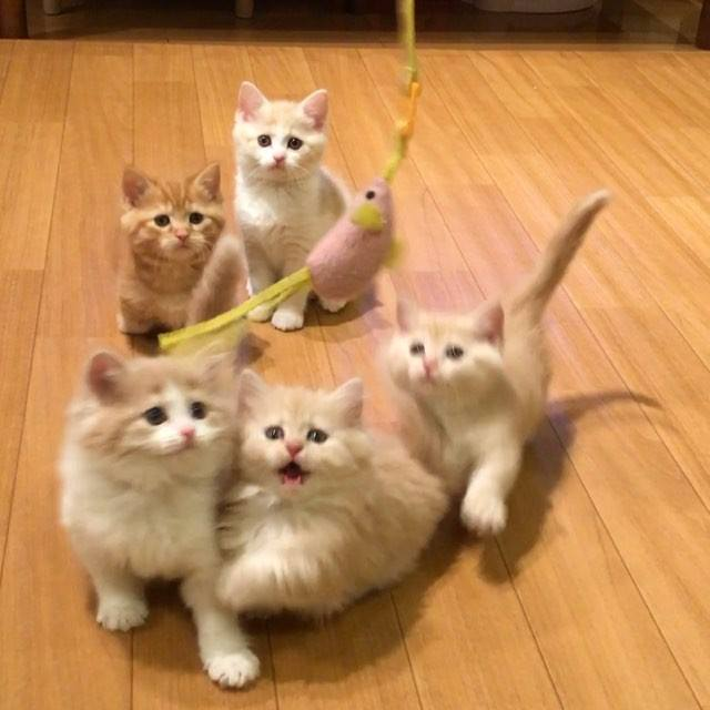 5 Gatinhos Brincando, Este Vídeo É Para Todos Que Ama Estes Seres!!!