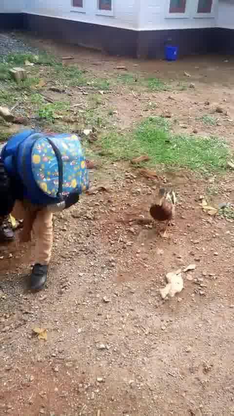 Amizade Entre Um Pato E Um Menino, Veja Que Amizade Mais Linda!