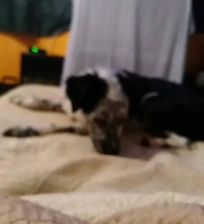 Cachorro Dando A Alegria Na Casa, Ele É Muito Fofo, Confira!