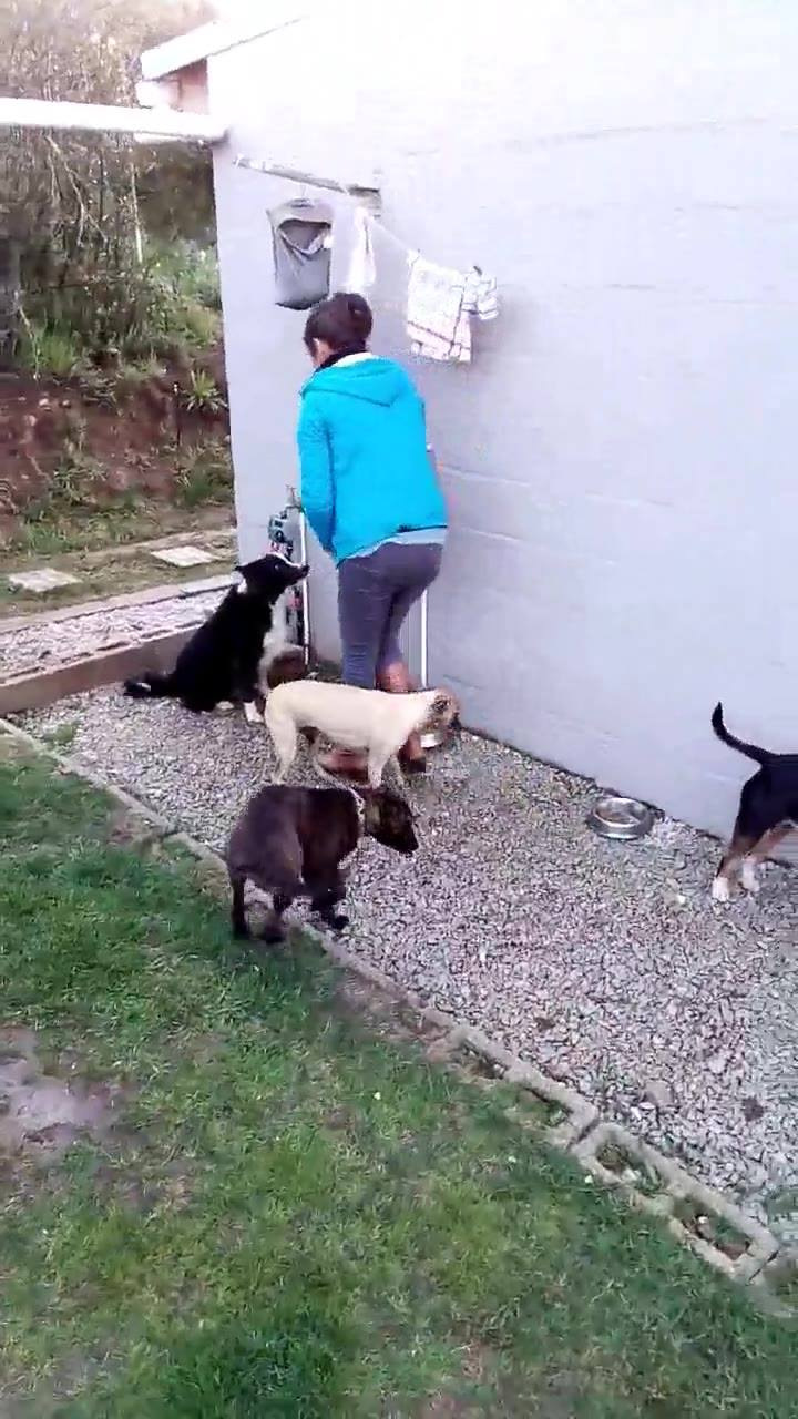 Cachorros Só Se Alimentam Após Cumprimentar A Humana, Confira!