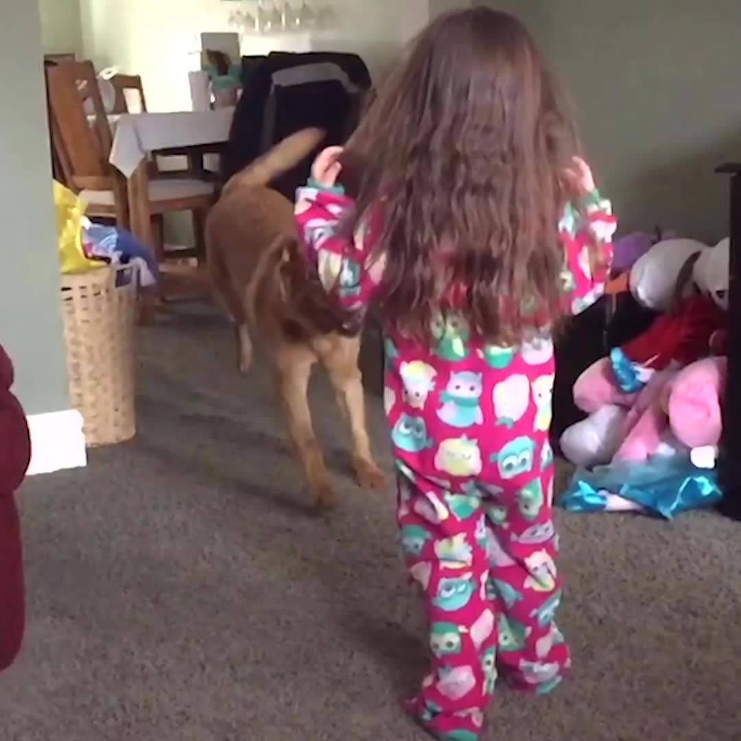 Cachorros Derrubando Crianças, Você Vai Rir Muito Com Essa Compilação!
