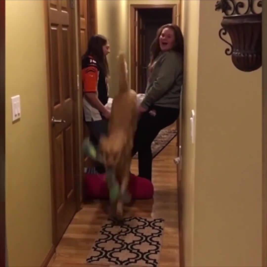 Cachorros Fazendo Coisas Engraçadas E Imitando Alguns Humanos!