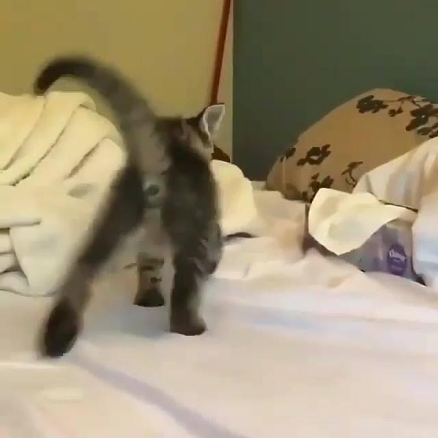 Filhotinho De Gato Mais Lindo Do Dia, Muito Fofinho Esse Bichano!