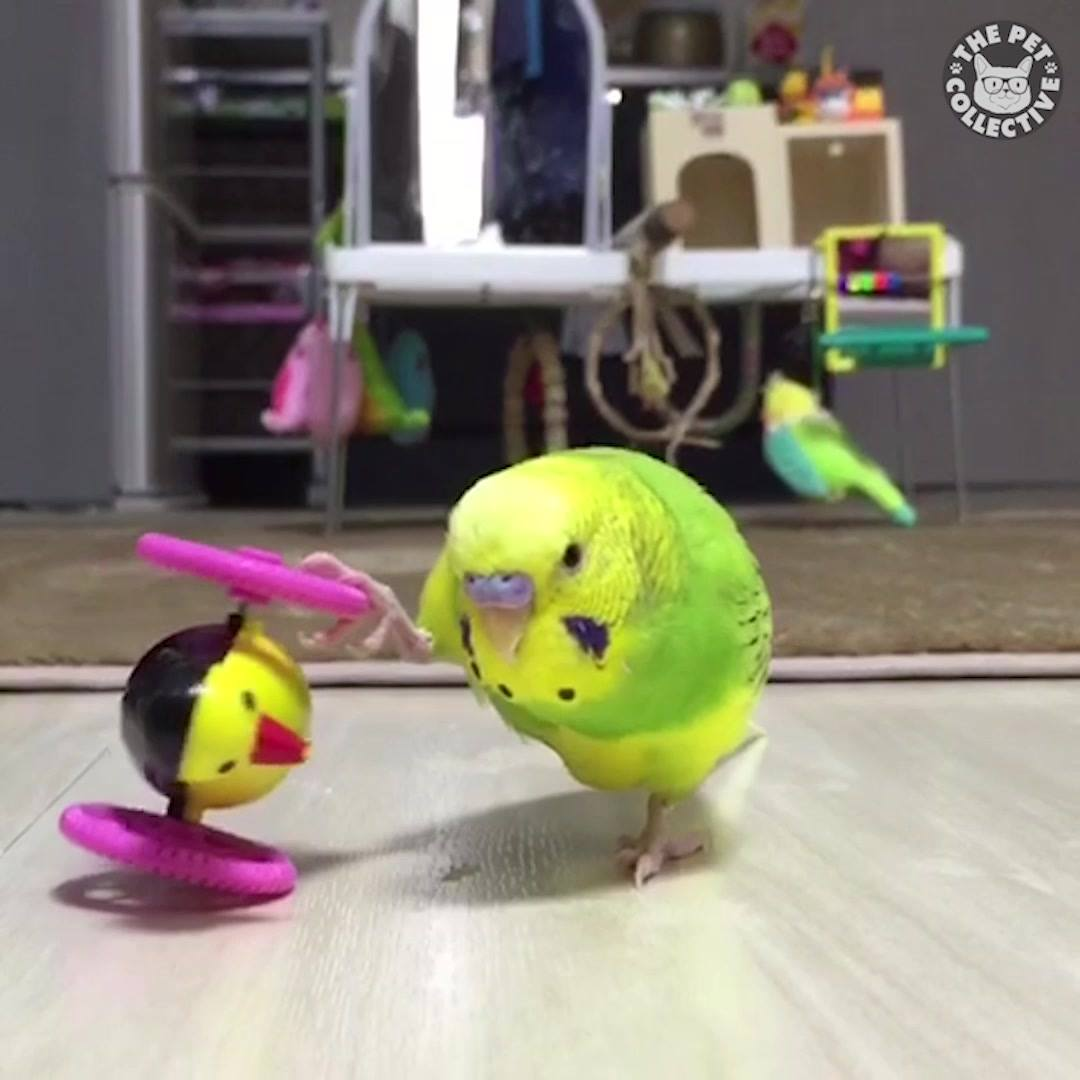 Pássaros Fazendo Coisas Engraçadas, Tem Um Até Que Pede Água Da Garrafa Hahaha!