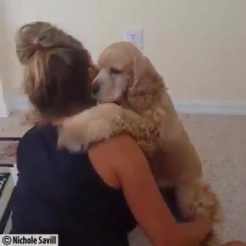 Animais Retribuindo Amor