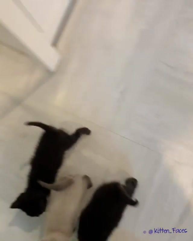 Os Três Gatinhos Mais Fofinhos Que Você Vai Ver, Uma Fofura Atrás Da Outra!