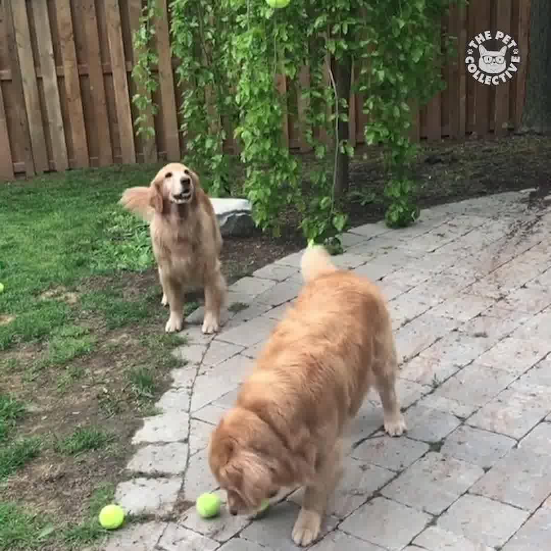 Vídeo Com Os Animais Mais Engraçados Que Você Vai Ver Hoje!!!