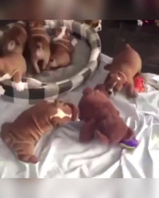 Vídeo Recheado De Situações Fofinhas Com Filhotes, Olha Só Que Lindinhos!!!