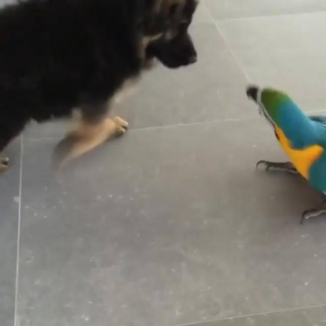 Arara Dando Trabalho Para Um Filhote De Cachorro, Para Compartilhar!