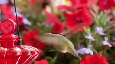 Um Dos Mais Belos E Singelos Vídeo De Animais Que Eu Já Vi!!!
