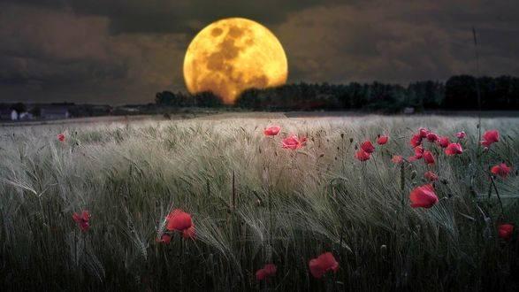 Boa Noite Amor! Saber Que Ao Amanhecer Vou Te Ver Faz Toda Diferença!!!