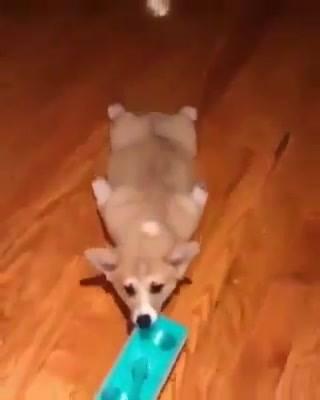Cachorrinho Ajudando