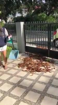 Cachorrinho Ajudando Sua Tutora A Limpar Quintal, Olha Só A Baguncinha!!!
