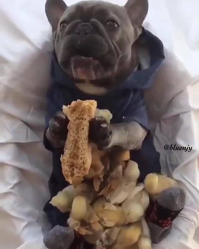Cachorrinho Comendo Com Pintinhos, Uma Cena Muito Diferente E Fofa!