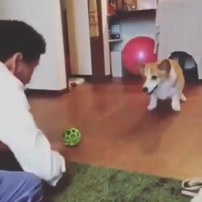 Cachorrinho Esperto