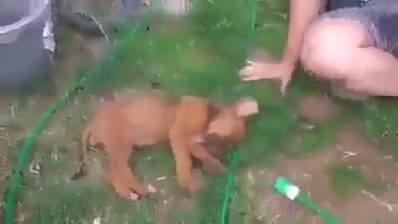 Cachorrinho Faz Drama