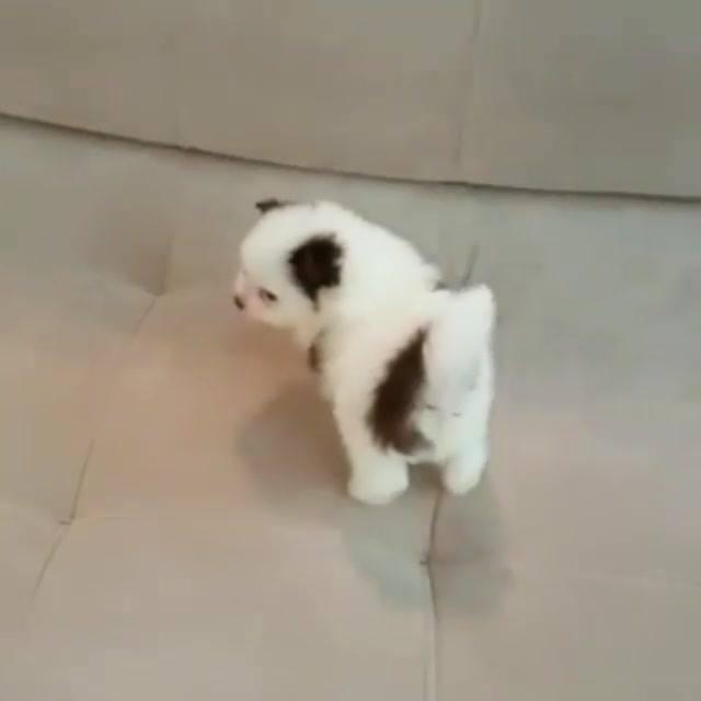 Cachorrinho Filhote