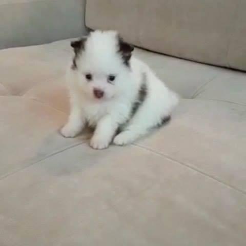 Cachorrinho Filhote Mais Fofo Do Dia, Mais Uma Fofura Para Você Compartilhar!